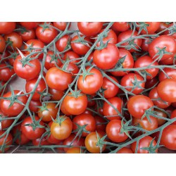 CHERRY TOMATO 500 gr