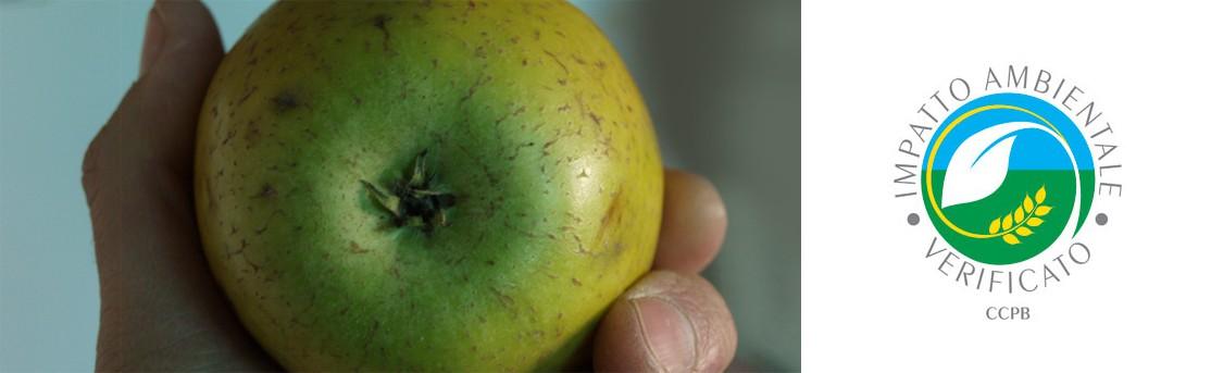 Frutta e Verdura BIO